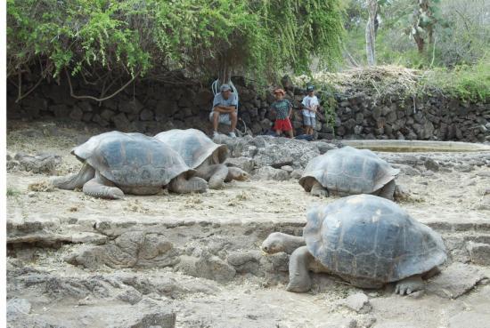 찰스다윈 연구소 앞 거북이들.
